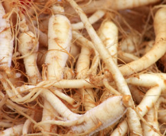 Ginseng Panax in Miami