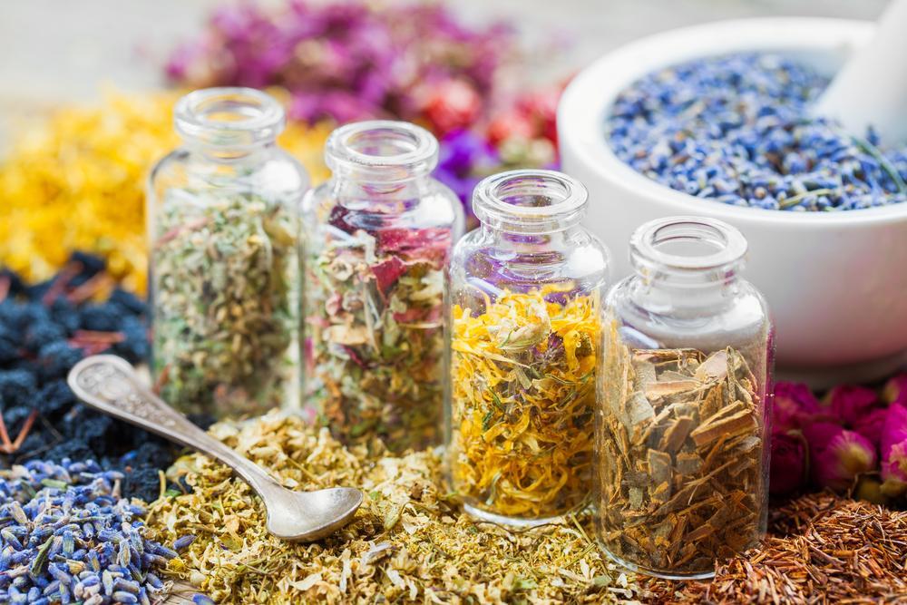Healing Herbs in Kendall